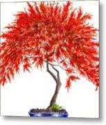 Bonsai Tree - Inaba Shidare Metal Print