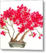 Bonsai Tree - Kurume Azalea Metal Print
