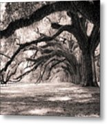 Boone Hall Plantation Live Oaks Metal Print