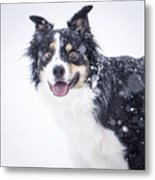 Border Collie In The Snow Metal Print