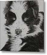 Surprised Border Collie Puppy Metal Print