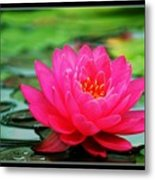 Bordered Water Lily Metal Print
