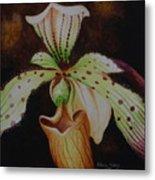 Borneo Orchid P Lebaudyanum Metal Print