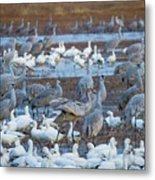 Bosque Cranes And Geese Metal Print