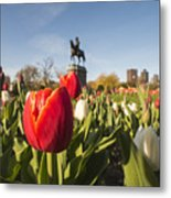 Boston Public Garden Tulips And George Washington Statue Metal Print