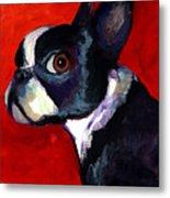 Boston Terrier Dog Portrait 2 Metal Print by Svetlana Novikova
