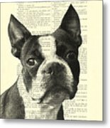 Boston Terrier Portrait In Black And White Metal Print