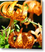 Botanical Art Prints Orange Tiger Lilies Master Gardener Baslee Troutman Metal Print