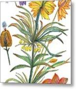 Botanical Flower-53  yellow flower Metal Print