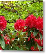 Botanical Garden Art Prints Red Rhodies Trees Baslee Troutman Metal Print