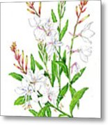 Botanical Illustration Floral Painting Metal Print