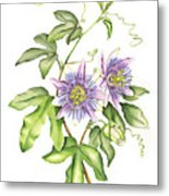 Botanical Illustration Passion Flower Metal Print