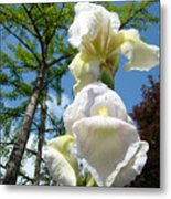 Botanical Landscape Trees Blue Sky White Irises Iris Flowers Metal Print