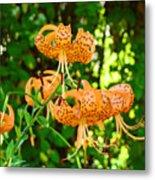 Botanical Master Gardens Art Prints Orange Tiger Lilies Baslee Troutman Metal Print