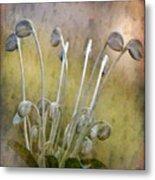 Botanical Specimen Metal Print