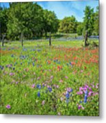 Botanical Variety Show In The Texas Hill Country Metal Print