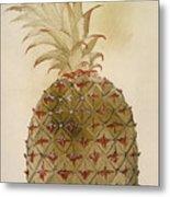 Botany: Pineapple, 1585 Metal Print