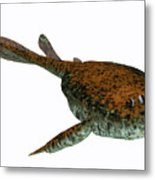 Bothriolepis Fish On White Metal Print