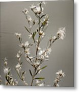 Botswana Wildflower  Metal Print