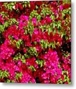 Bougainvillea And Foliage Metal Print