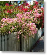 Bougainvillea In Old Eau Gallie Florida Metal Print
