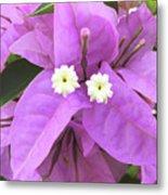 Bougainvillea Petals Metal Print