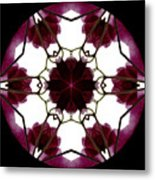 Bougainvillea Transparency 3 Metal Print