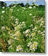 Bouquet Of Wildflowers Along Country Road In Mchenry County Metal Print