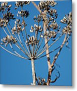 Bouquets Of Seeds Metal Print