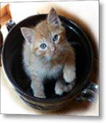 Bowlful Of Kitten Metal Print