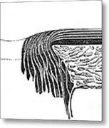 Bowmans Membrane, Retinal Layers, 1842 Metal Print