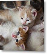 Box Full Of Kittens Metal Print by Garry Gay