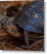 Box Turtle 2 Metal Print