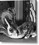 Boxer And Kitten Metal Print