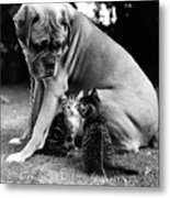 Boxer And Kittens Metal Print by Ray Moreton
