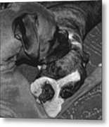 Boxer Buddies Metal Print