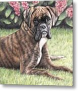Boxer Girl Metal Print