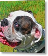Boxer Portrait Metal Print by E Robert Dee