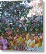 Bradford Pear Tree With Berries Metal Print