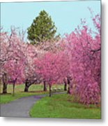 Branch Brook Cherry Blossoms II Metal Print