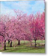 Branch Brook Cherry Blossoms Metal Print