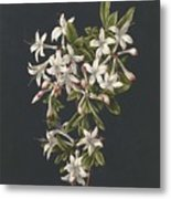 Branch Of A Flowering Azalea, M. De Gijselaar, 1831 Metal Print