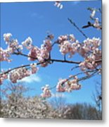 Branch Of Blossoms Metal Print