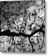 Branch Patterns Metal Print