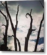 Branch Silouettes On Skeleton Beach Metal Print