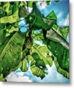 Branch With Green Fruit Metal Print