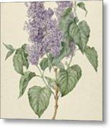 Branch With Purple Lilacs, Maria Geertruyd Barbiers-snabilie, 1786 - 1838 Metal Print