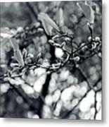 Branch With Seed Pods Metal Print
