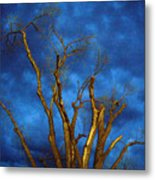 Branches Against Night Sky H Metal Print