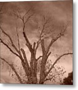 Branches Against Sepia Sky H   Metal Print